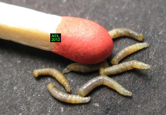Comme se délivrera des taches de rousseur avec laide du persil